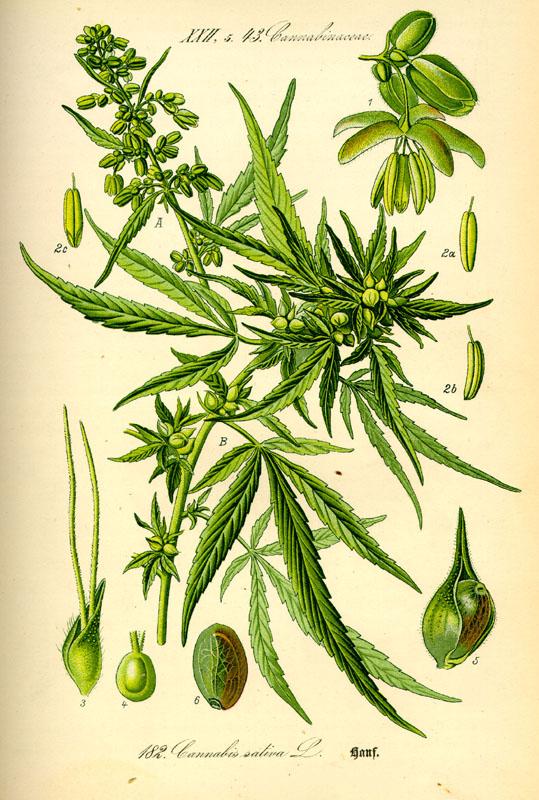'Flora von Deutschland Österreich und der Schweiz', professor Otto Wilhelm Thome (1885)