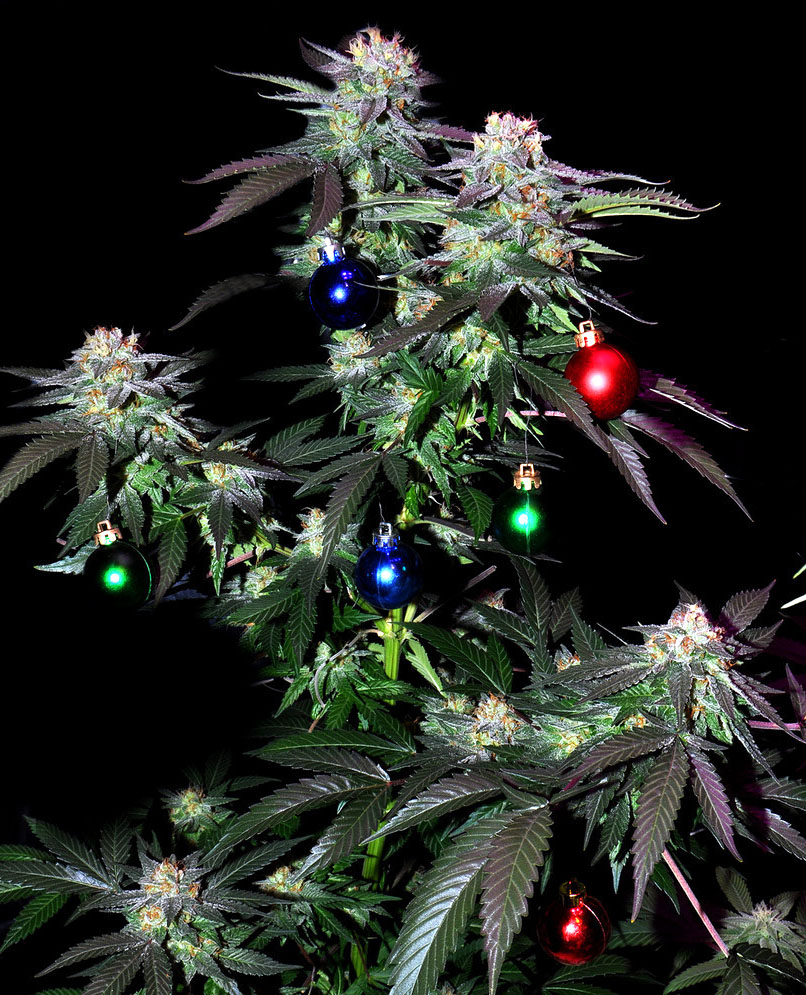 Christmas_cannabis_tree_01.jpg