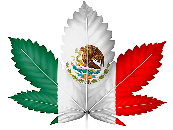 mexican-cannabis